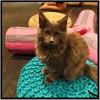 Cat Cafe Review: Maison de Moggy, 17 West Port, Edinburgh EH1 2JA