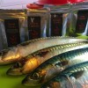 Recipe: Tandoori Spiced Mackerel
