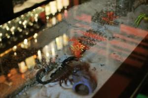 Safari_lounge_edinburgh_desert_glass_bar