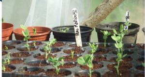 glasgow gardening workshop