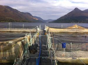 loch leven scottish salmon marine harvest