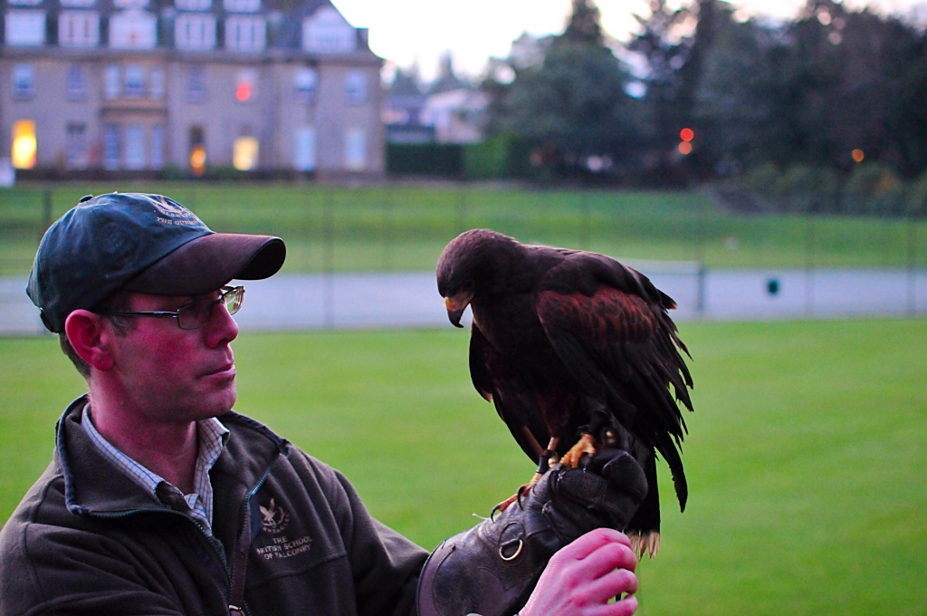 Gleneagles hotel Perthshire scotland falconry