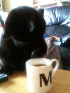 Maison de Moggy Stockbridge Edinburgh cat cafe