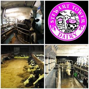 Stewart tower dairy ice cream Gleneagles Perthshire