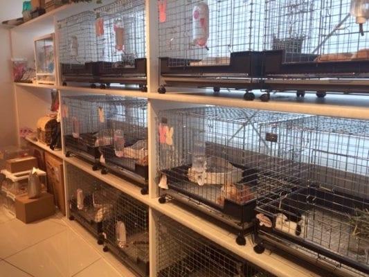 Hedgehog_Cafe_Japan_cages