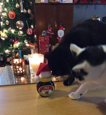 fred marmite christmas name