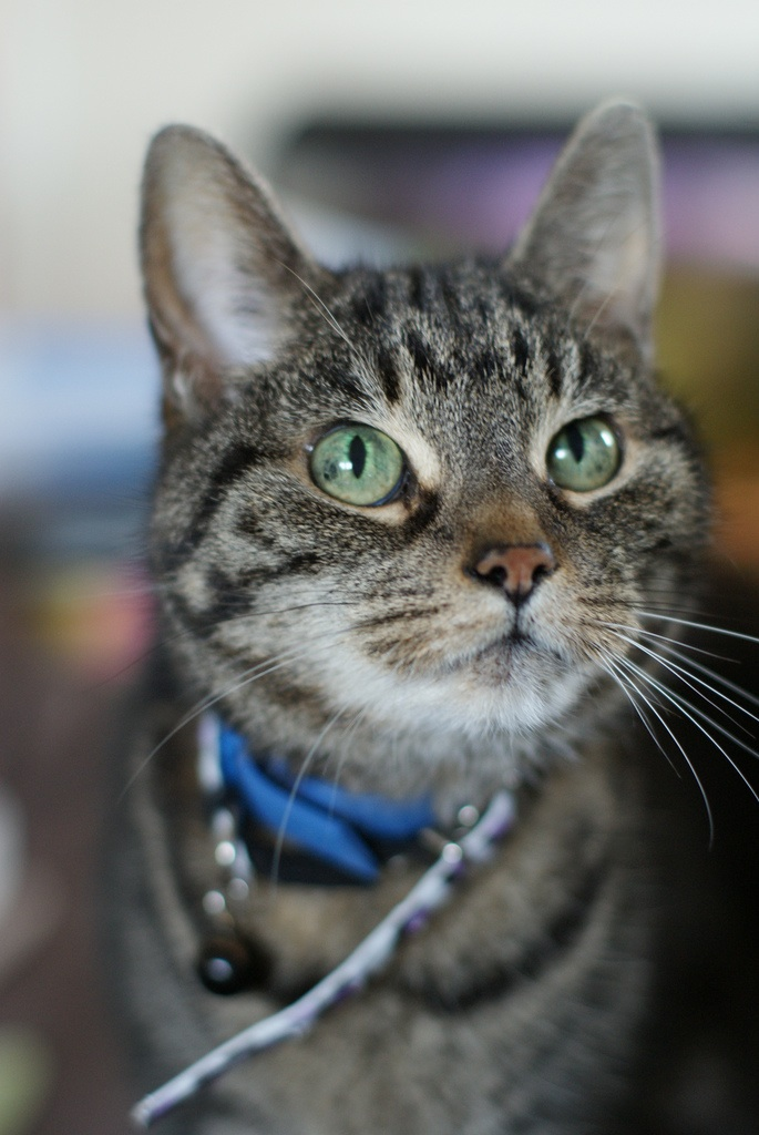 Maison de Moggy: Cat Cafe opening in Stockbridge, Edinburgh