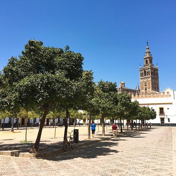 Courtyard of oranges, Seville