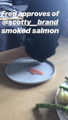 fred scotty brand salmon
