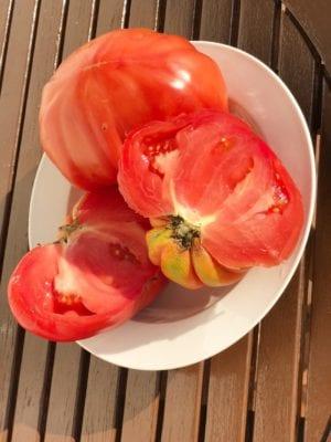 Foodie Explorers tomato sauce recipe