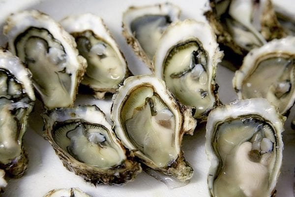 Seafood scotland Oyster shucking