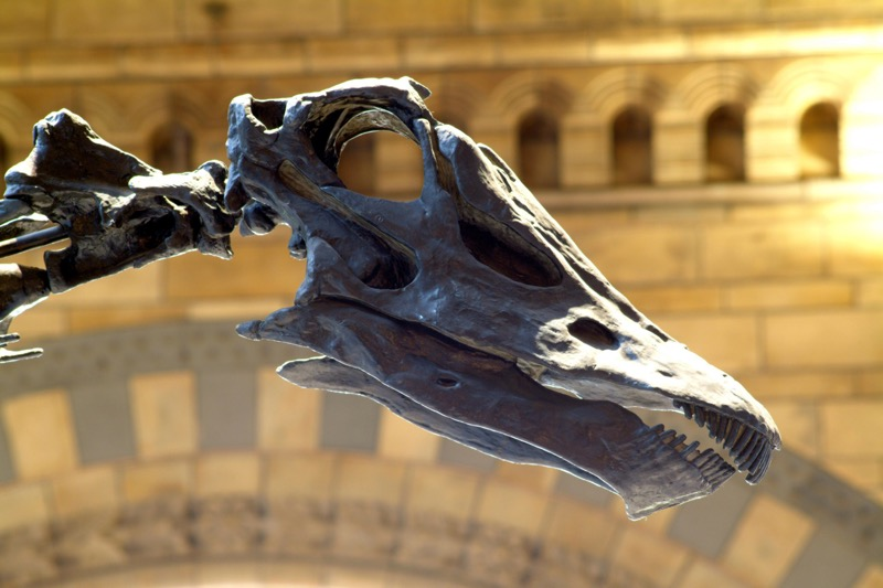Dippy the Diplodocus is coming to Glasgow