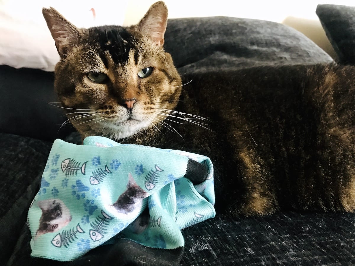 printsfield personalised socks with cats