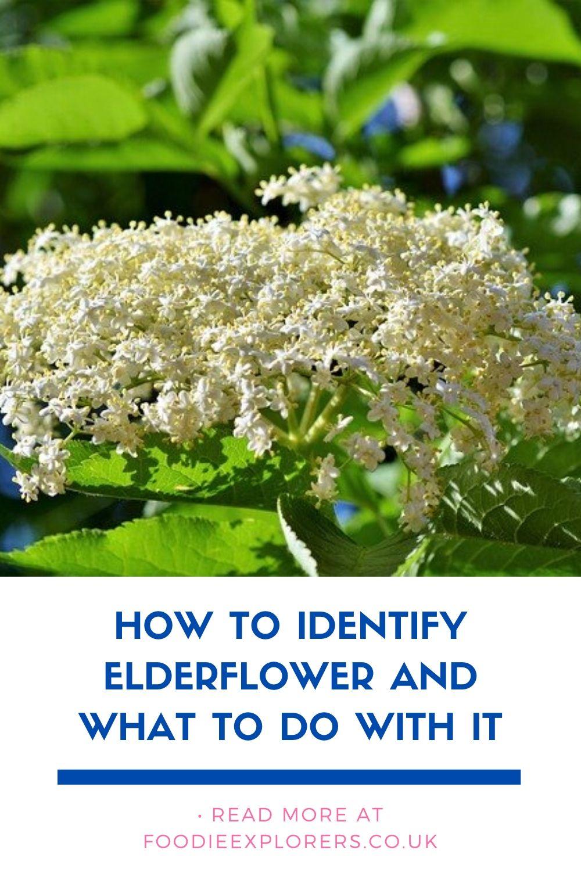 elderflower pinterest