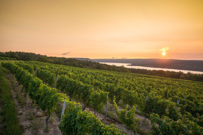 Vineyard-Sunrise-credit-Stu-Gallagher