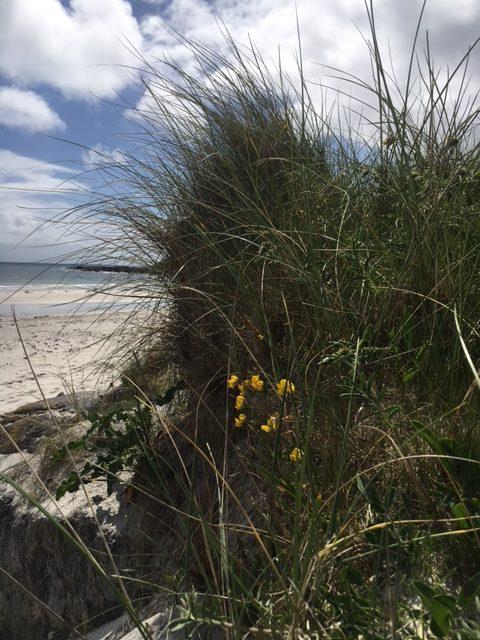 Maureen beach