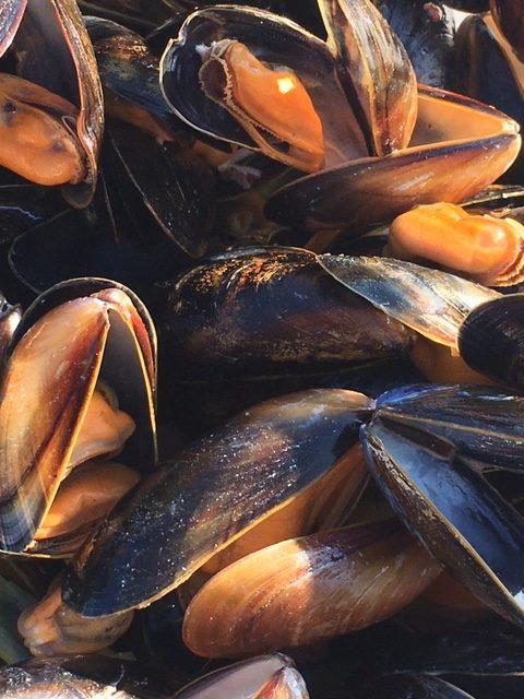 Maureen mussels